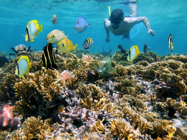 Tropical Snorkeling Coral Reef Safe Sunscreen